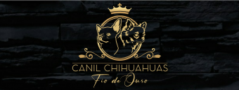 Canil Fio de Ouro - Chihuahua Pelo Curto e Longo